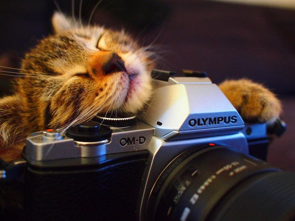 Месяцем, картинка фотоаппарат смешная