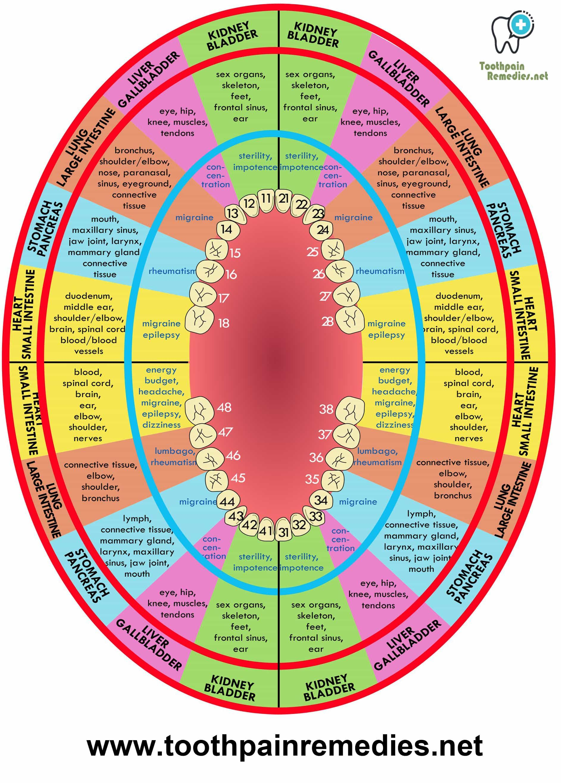 Each Tooth Is Related With An Organ In The Body Pain In Each Tooth