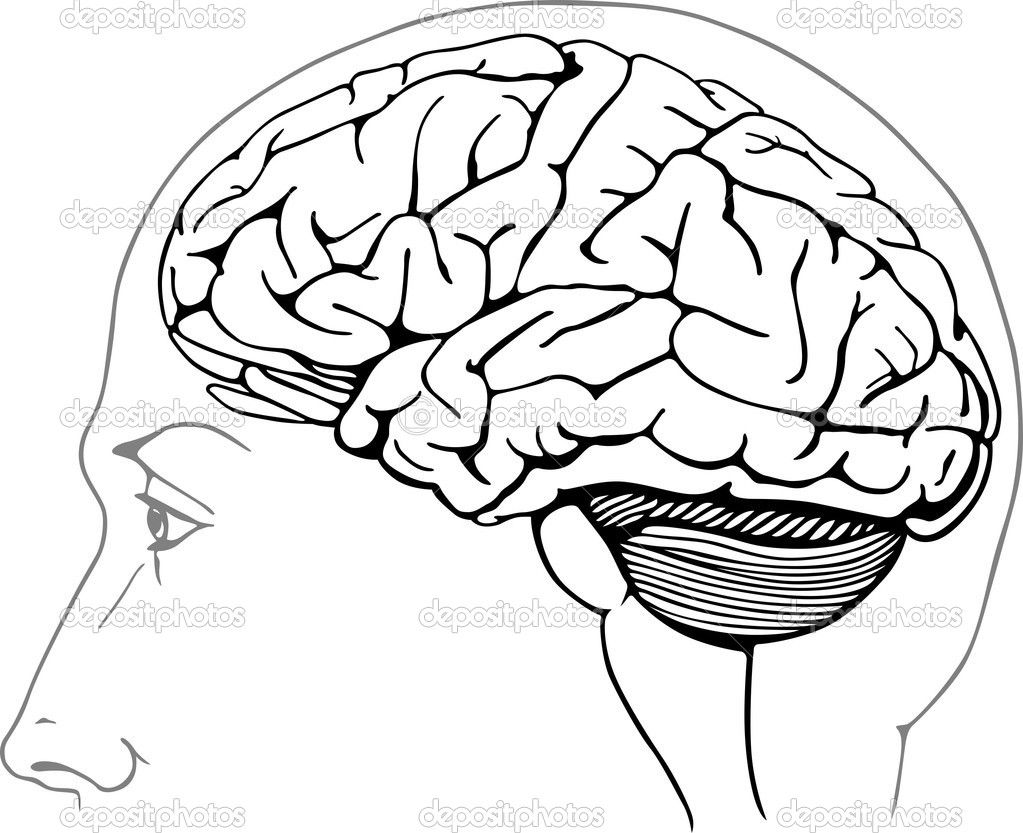 awesome brain pictures to color special picture