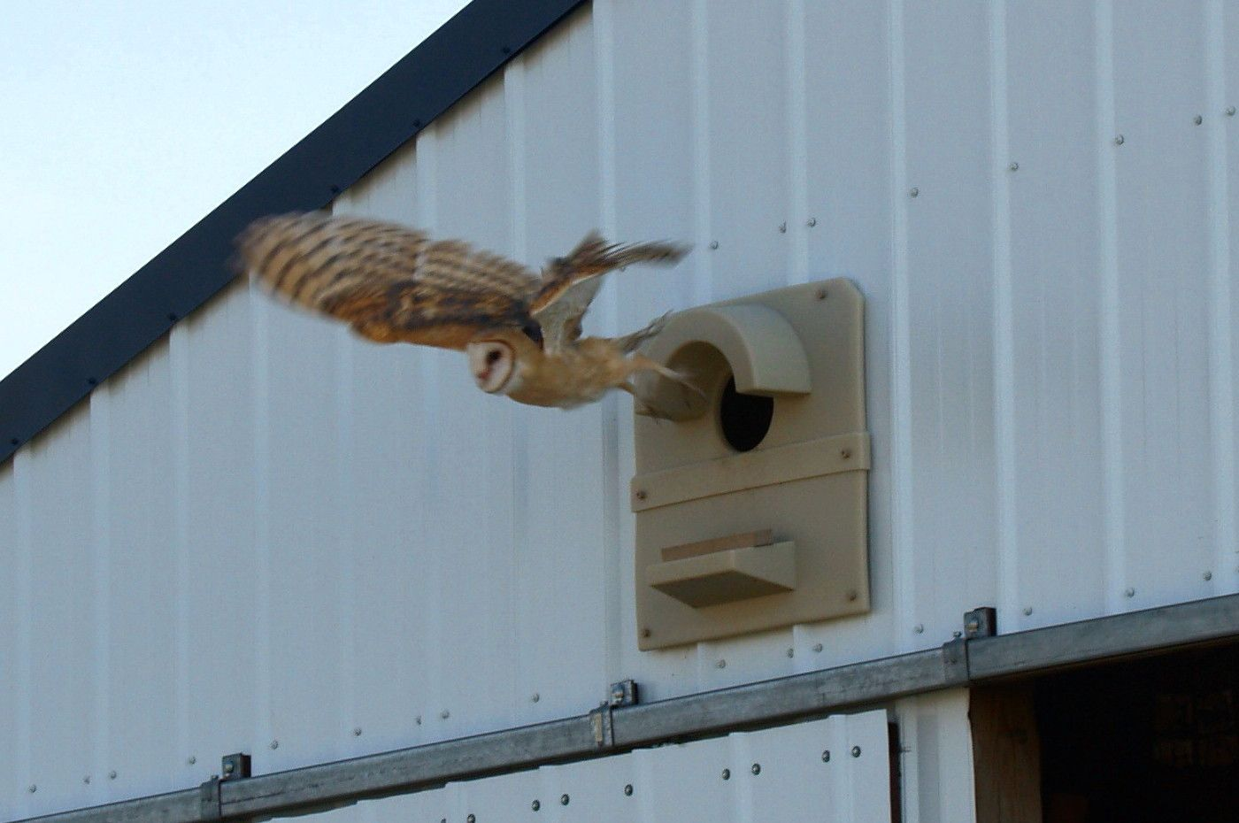 Barn Owl flying from barn model Thought we could install one of these near the Horse Stables at Camp Conowingo! :D