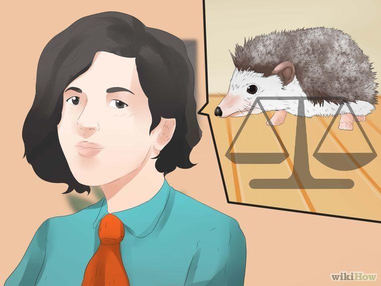 How to take care of a hedgehog hedgehog a hedgehog