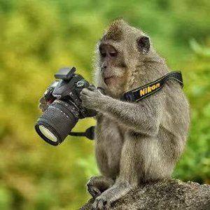 Fellow Nikon Fan