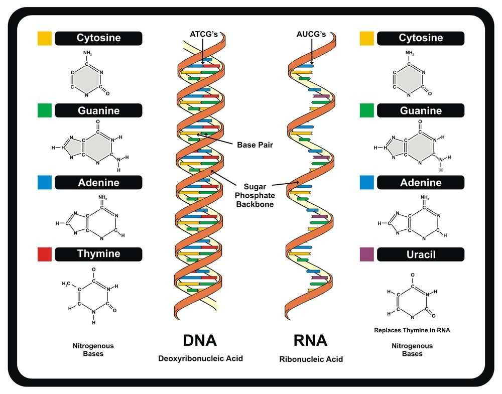 101 best DNA & RNA images on Pinterest