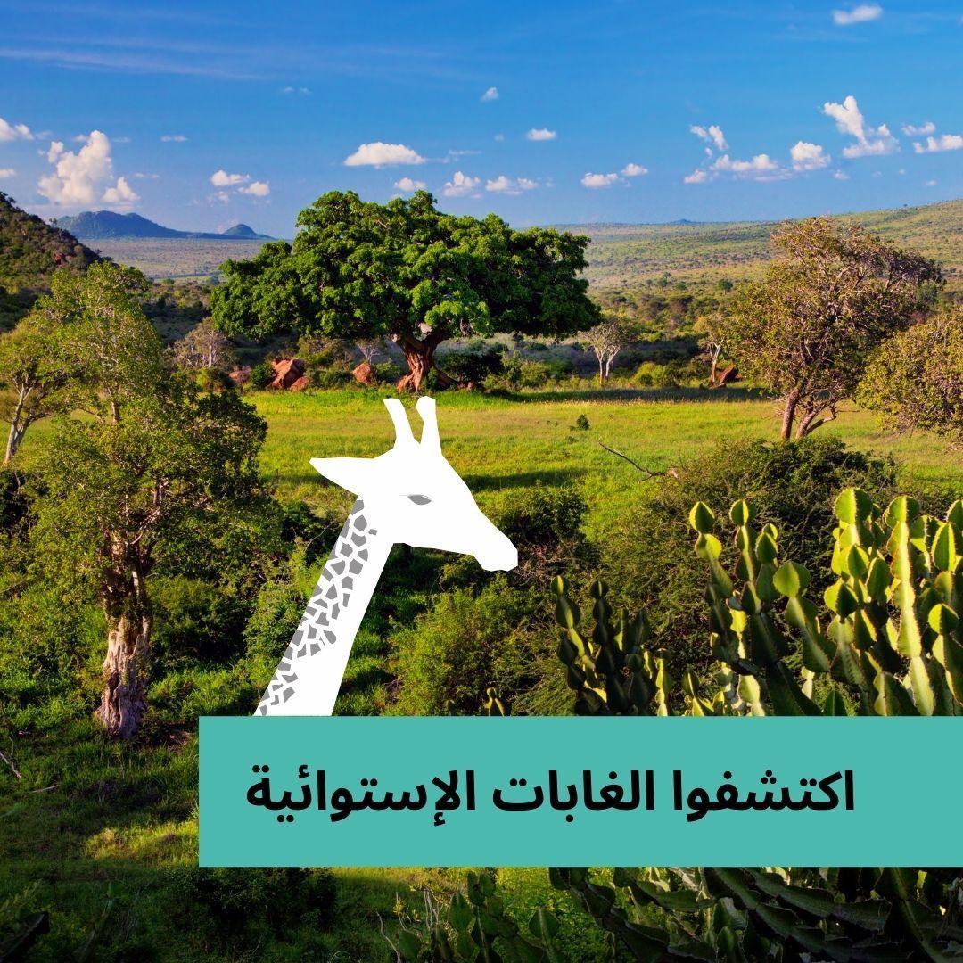 غابات السافانا يرجع اسم السافانا الى أصل إسباني Savanna ويعنى الحشائش الممتدة في السهول أو الأرض الممتدة وتتميز غابات Nature Natural Landmarks Landmarks