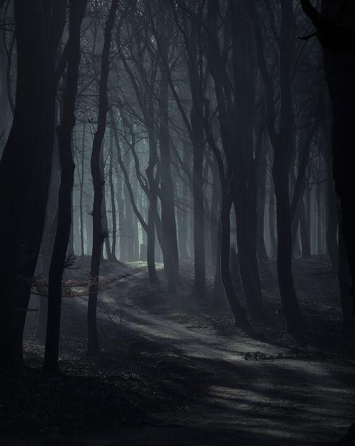 Umgebung, Bäume, Weg, Nebel