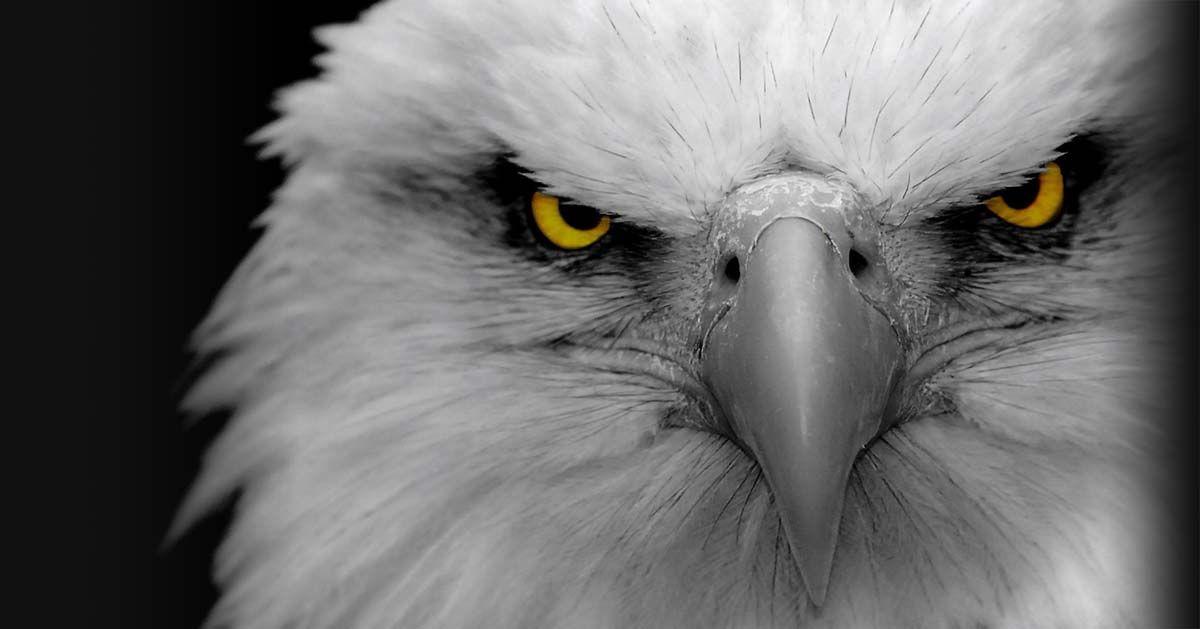 Translation Affiliate Program Eagle Wallpaper Eyes Wallpaper Eagle Images Cool eagle wallpaper 3d