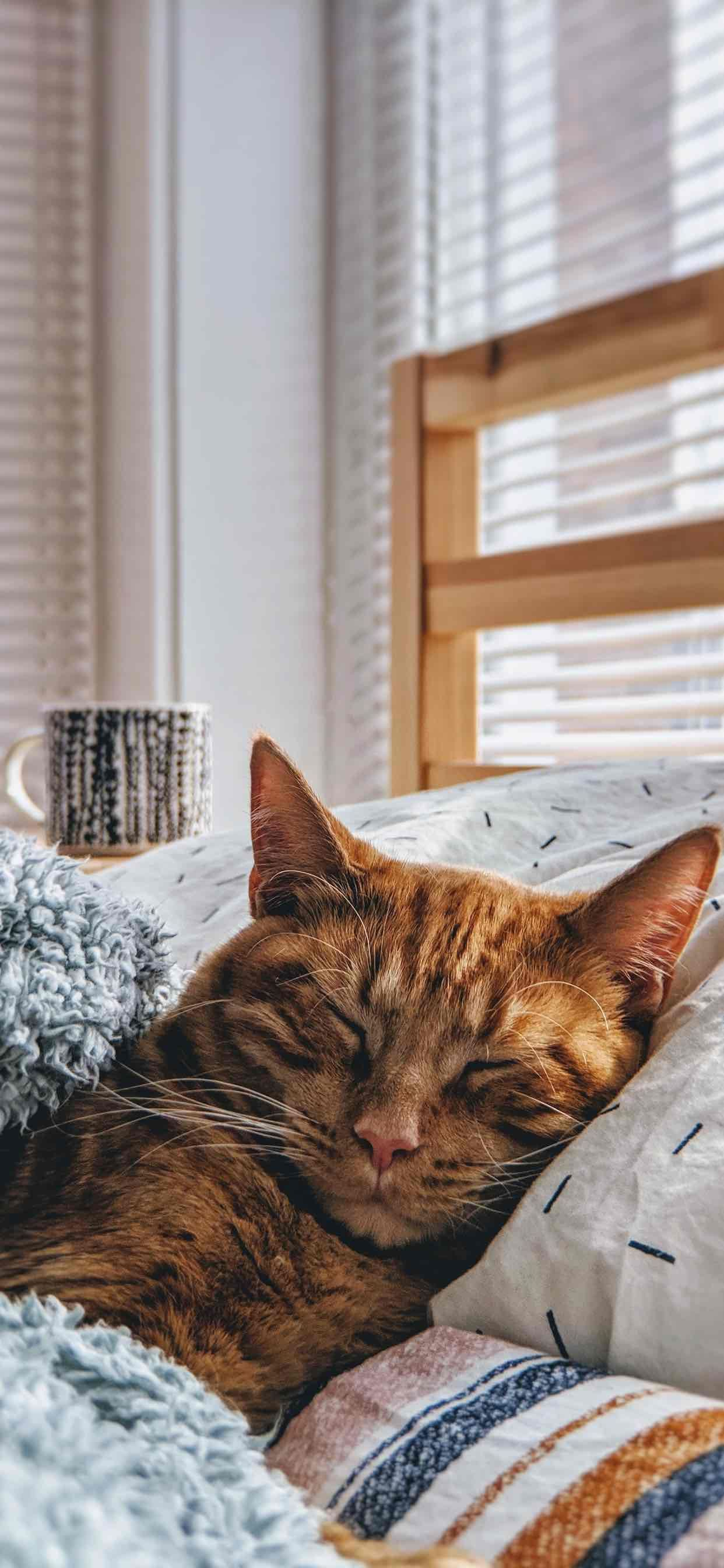 Beautiful Sleeping Cat Wallpaper For Iphone Xs Max Cute