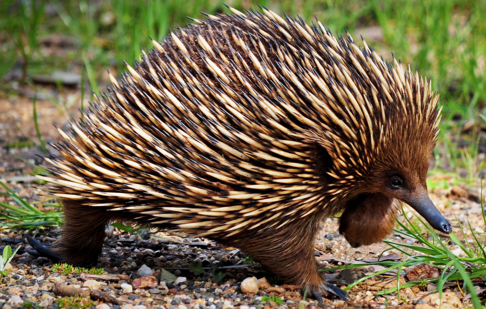 17 Fun Facts About Hedgehogs! [2020] Bird Watching HQ in