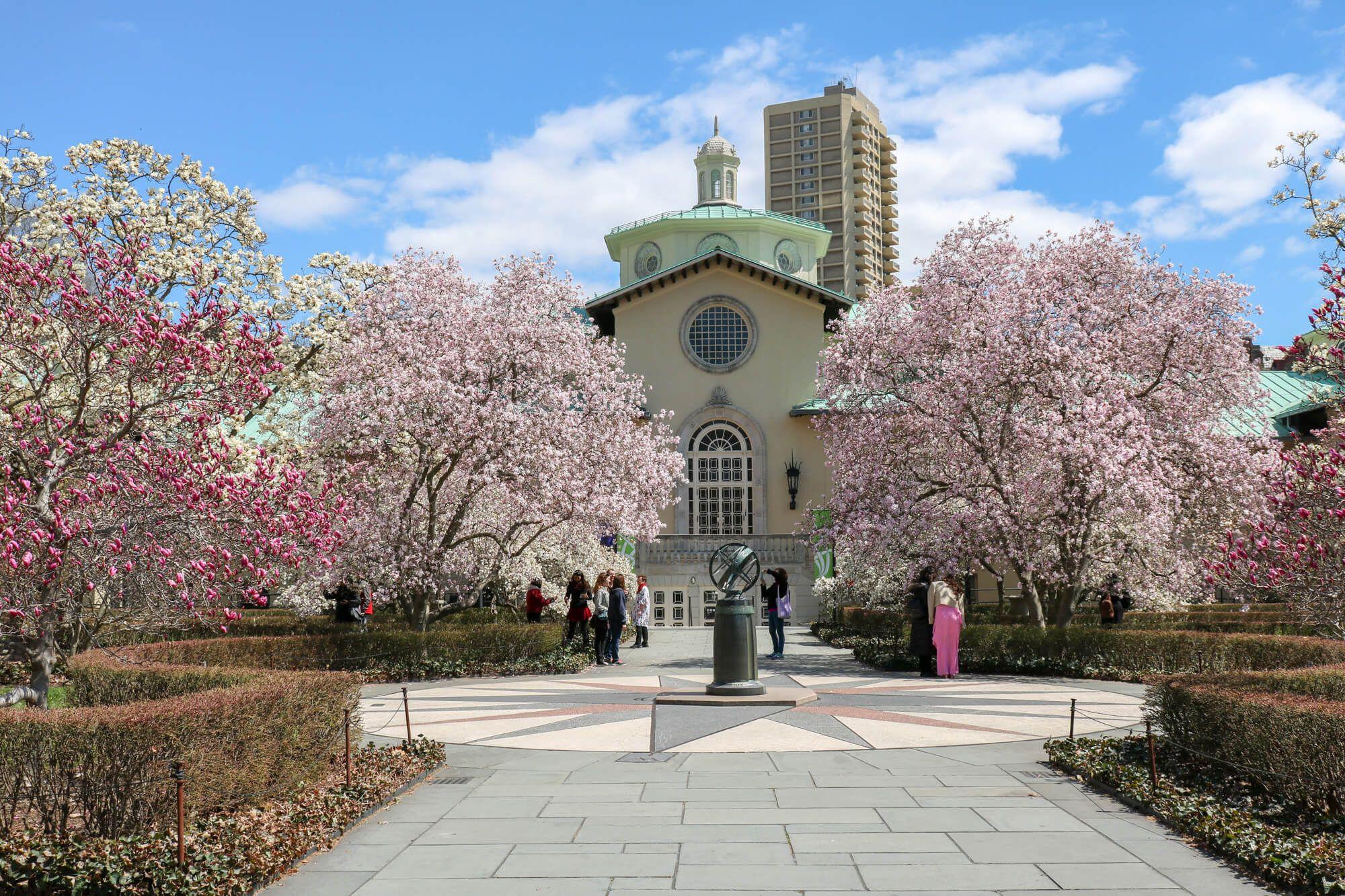New York City Brooklyn Magnolia Plaza Brooklyn Botanic Gardens 2018 Botanical Gardens Botanical Flowering Cherry Tree