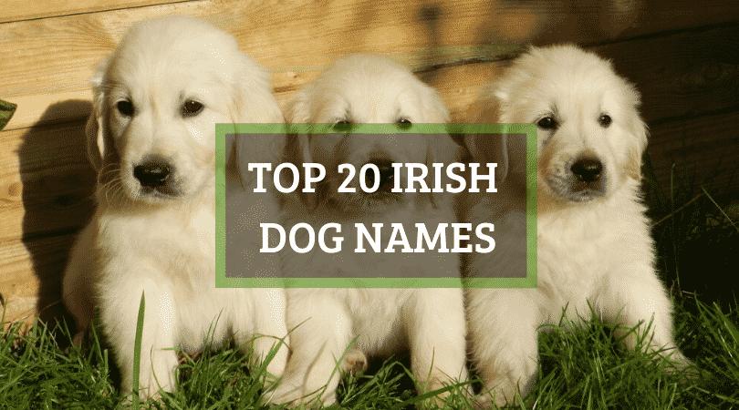 20 SPECIAL Irish dog names, both male and female Irish