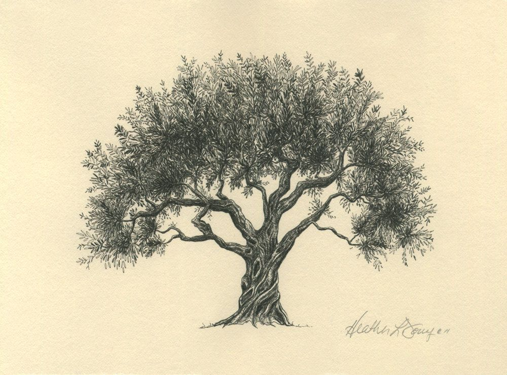 Olive tree drawing pen and ink fine art print on by theinklab olive tree drawing pen and ink fine art print on by theinklab 3000 usd altavistaventures Image collections