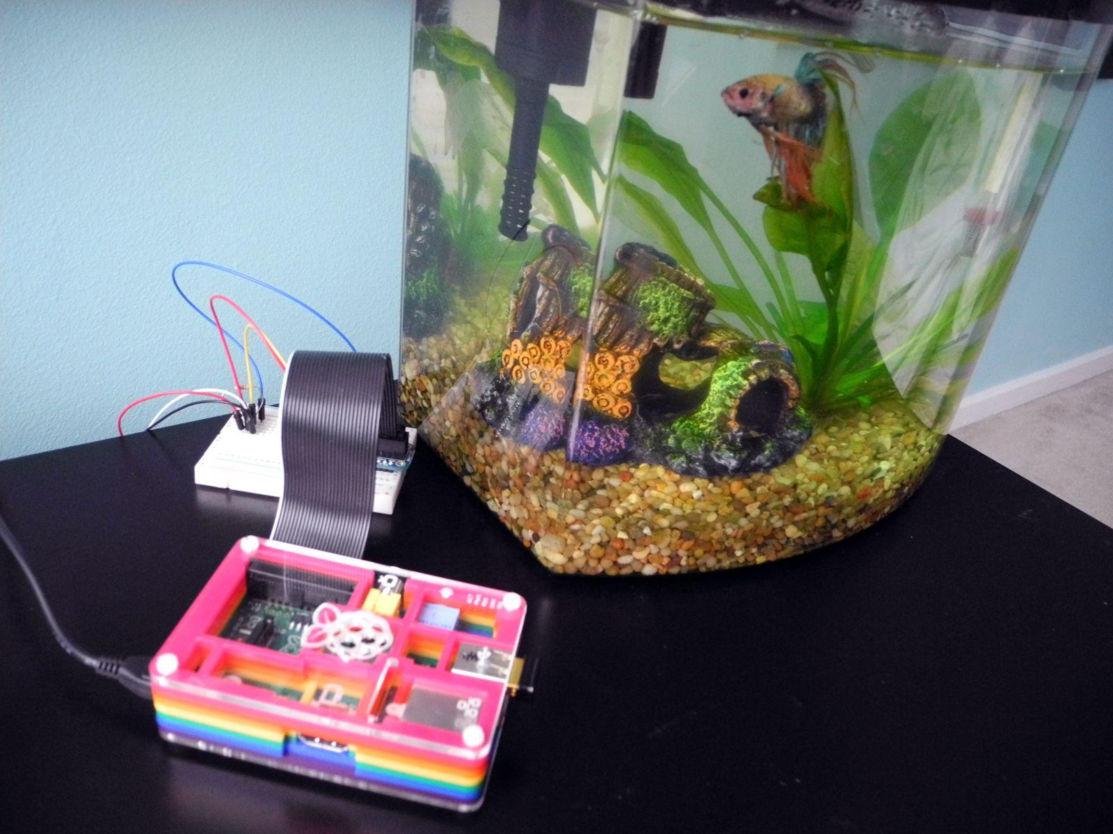 The Quantified Fish: How My Aquarium Uses Raspberry Pi | DIY