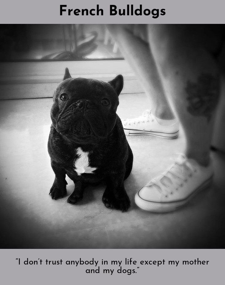 Did You Know That There Are Over 300 Words For Love In Canine Gabriel Zevin French Bulldogs Frenchbulldoglov French Bulldog French Bulldog Funny Bulldog