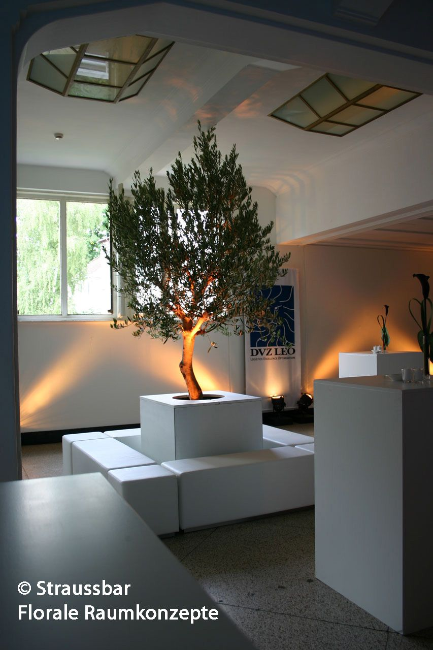 olivenbaum als raum interieur hamburg messe dekoration messestand decorations fai rent a. Black Bedroom Furniture Sets. Home Design Ideas