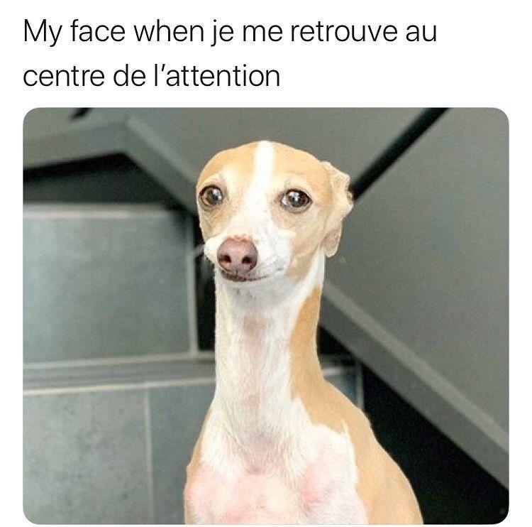 Pin Op Memes Fr