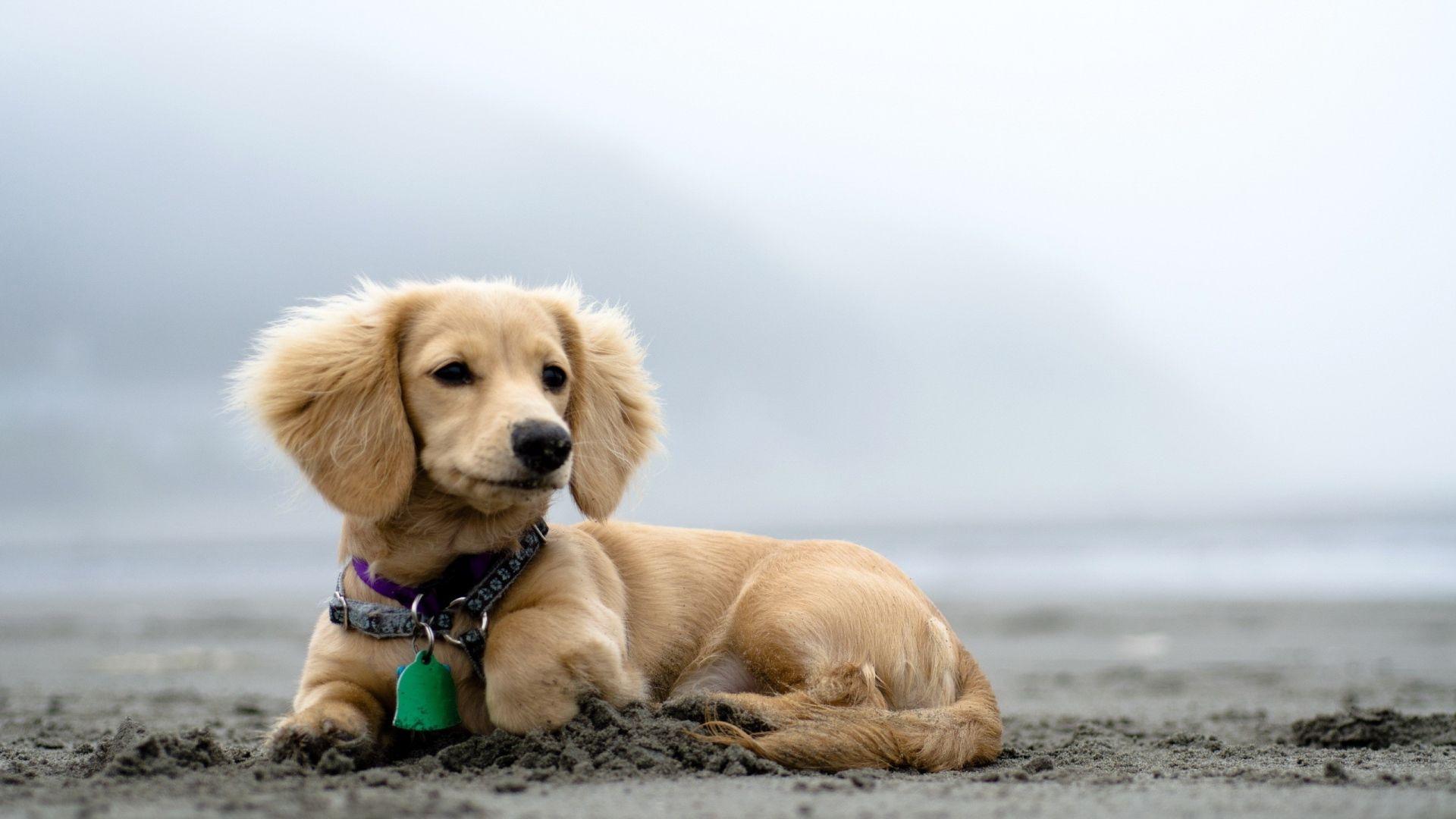 Wallpaper dog beach blurry 1920x1080