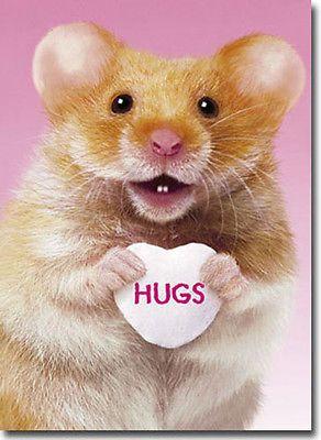 Hug Me Hamster A Press Valentine's Day Card Greeting Card
