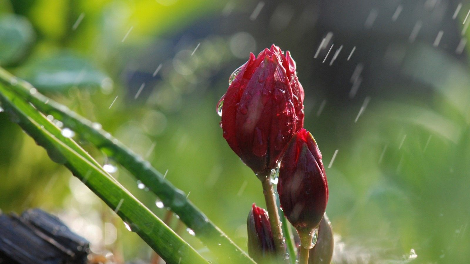 Every Flower Is A Soul Blossoming In Nature Gerard De Nerval No Rain No Flowers Rain Wallpapers Green Nature