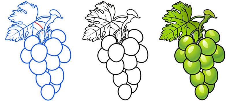 8 Dibujos De Uva Para Ninos Vines Grapes Art