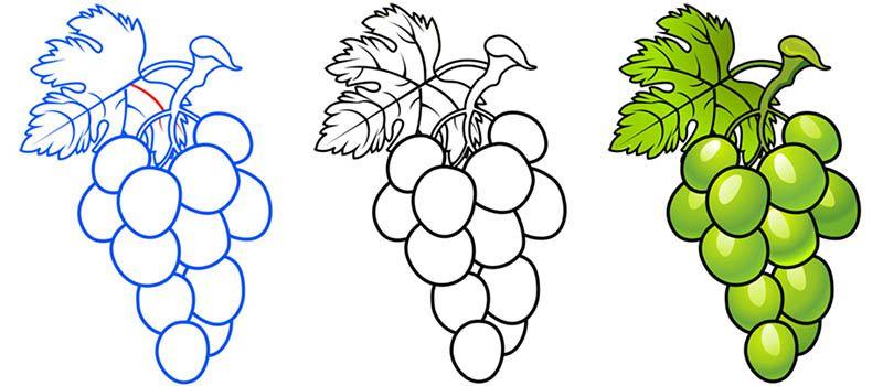 dibujos de uva para nios racimos de uvas para colorear ...