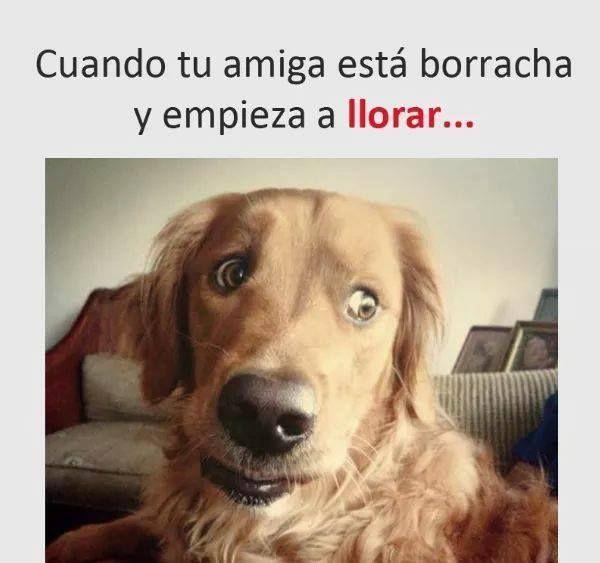 APP PARA HACER MEMES #memes #chistes #chistesmalos #imagenesgraciosas #humor