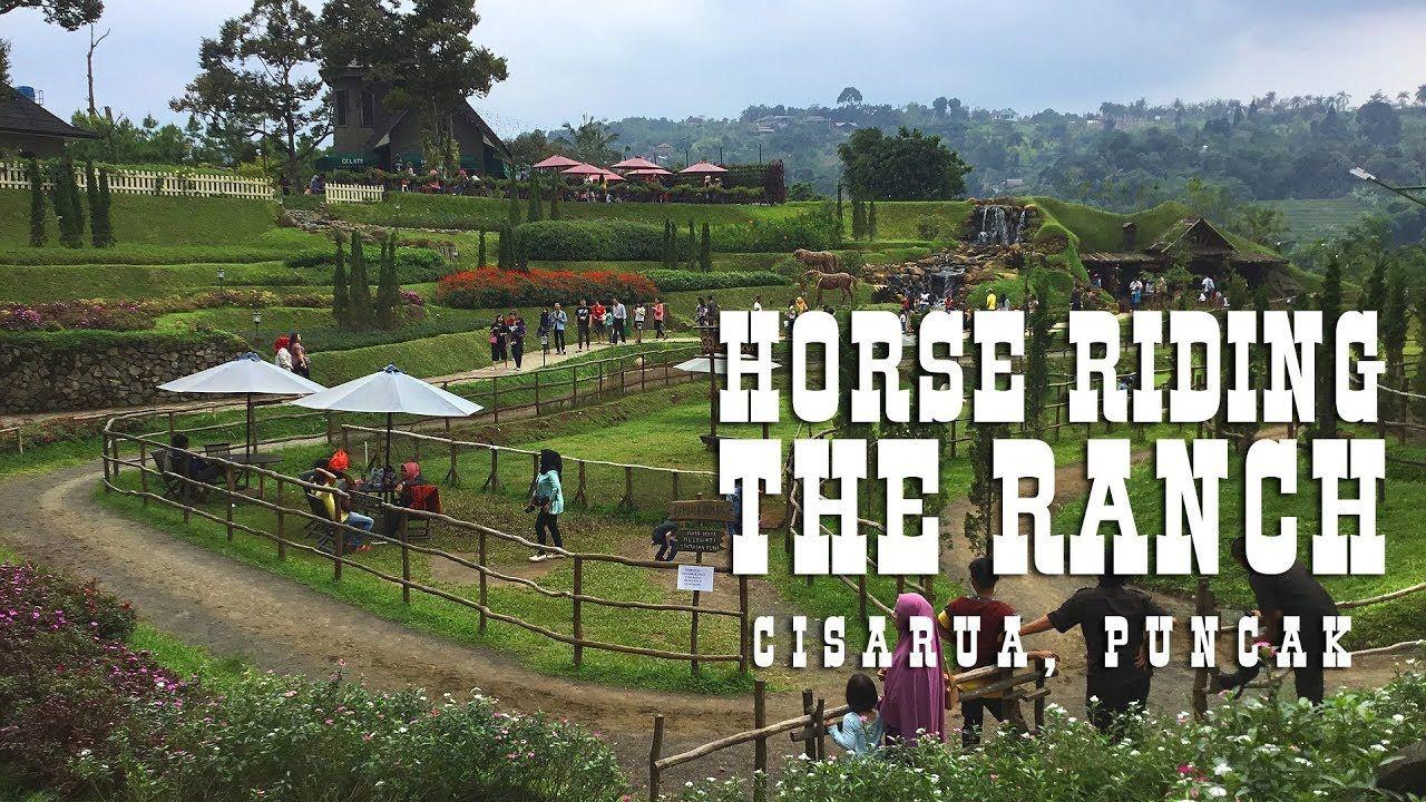 Berkuda Seru Untuk Anak Di The Ranch Cisarua Puncak Dengan Pemandangan I Horse Riding For Kids Horses Horse Riding