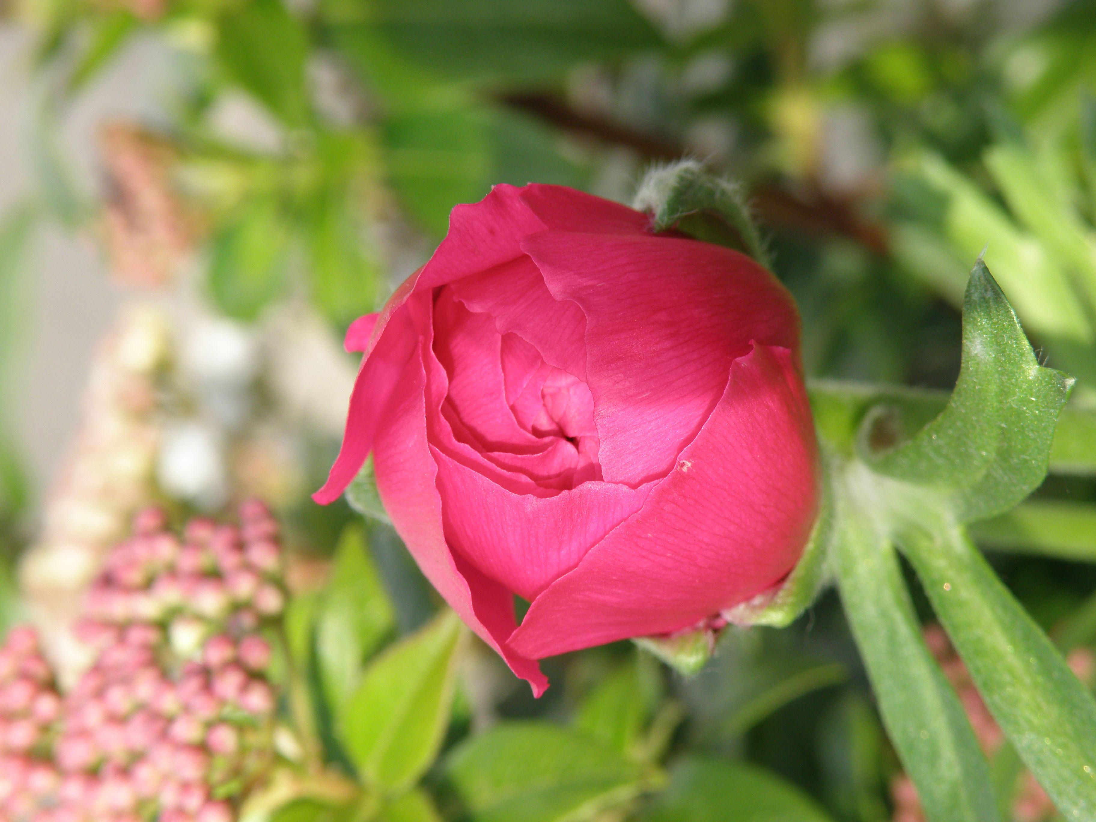 9055aa9f273faf1eab7b526779da1cc0 Luxe De Fleurs De Jardin Des Idées
