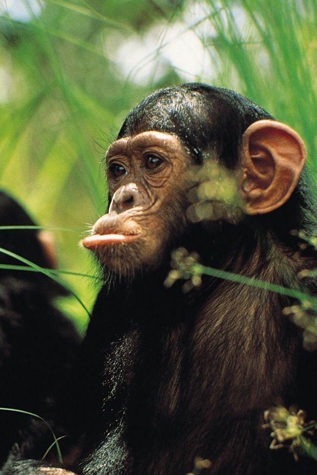 26007349d9e Trompas Types Of Monkeys