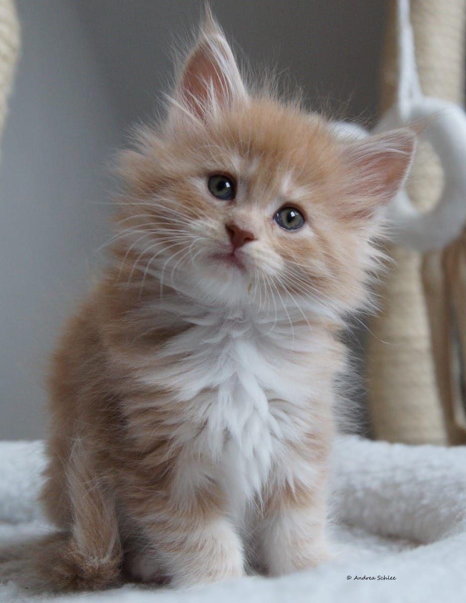 Deine Tierwelt Katzen