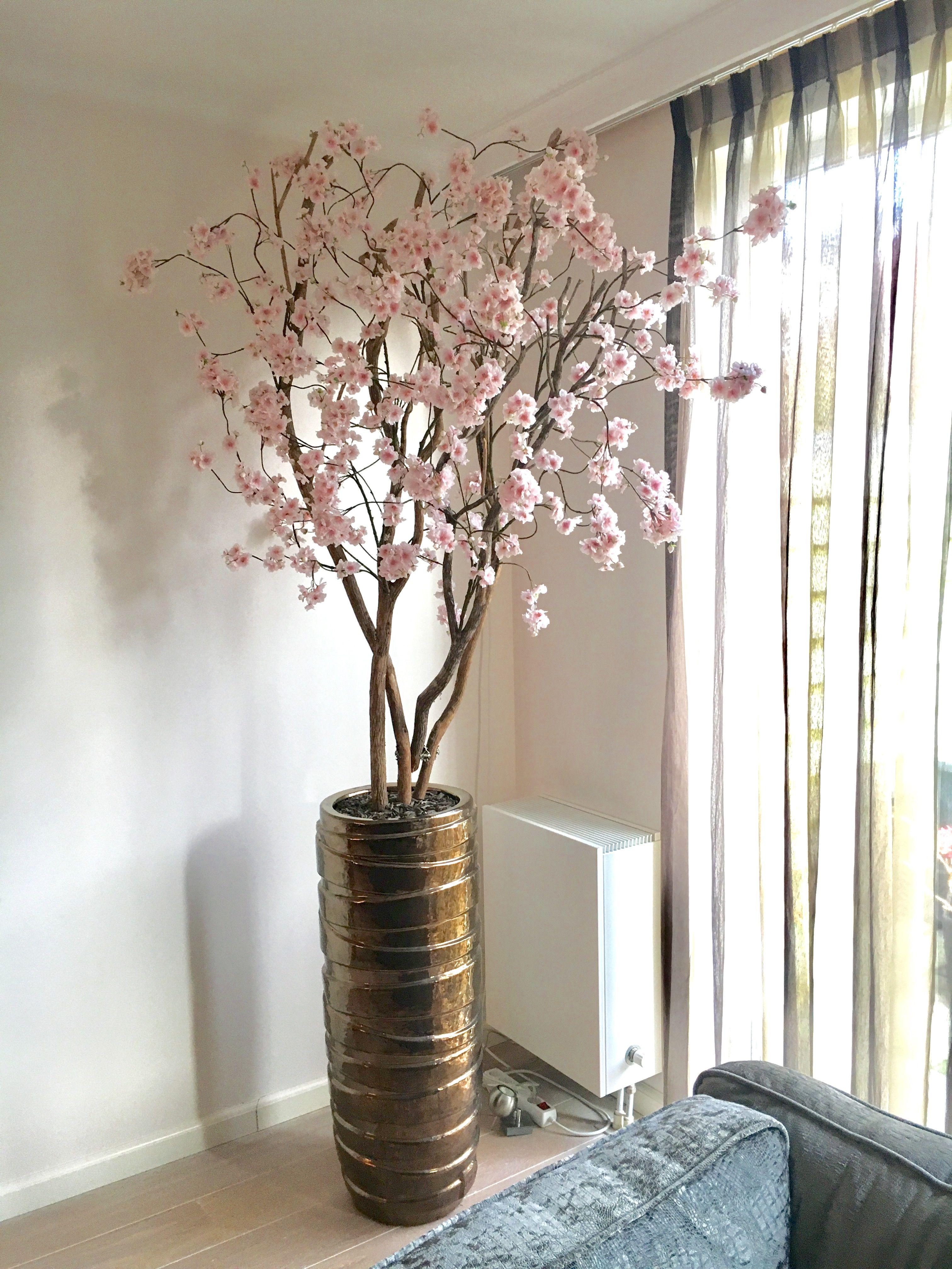 Family Tree Woonkamerplanten Huis Ideeen Decoratie Bloesembomen