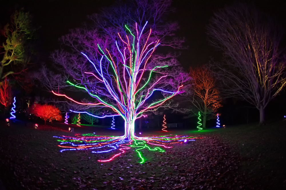 Christmas At Kew Kew Light Trails Photo