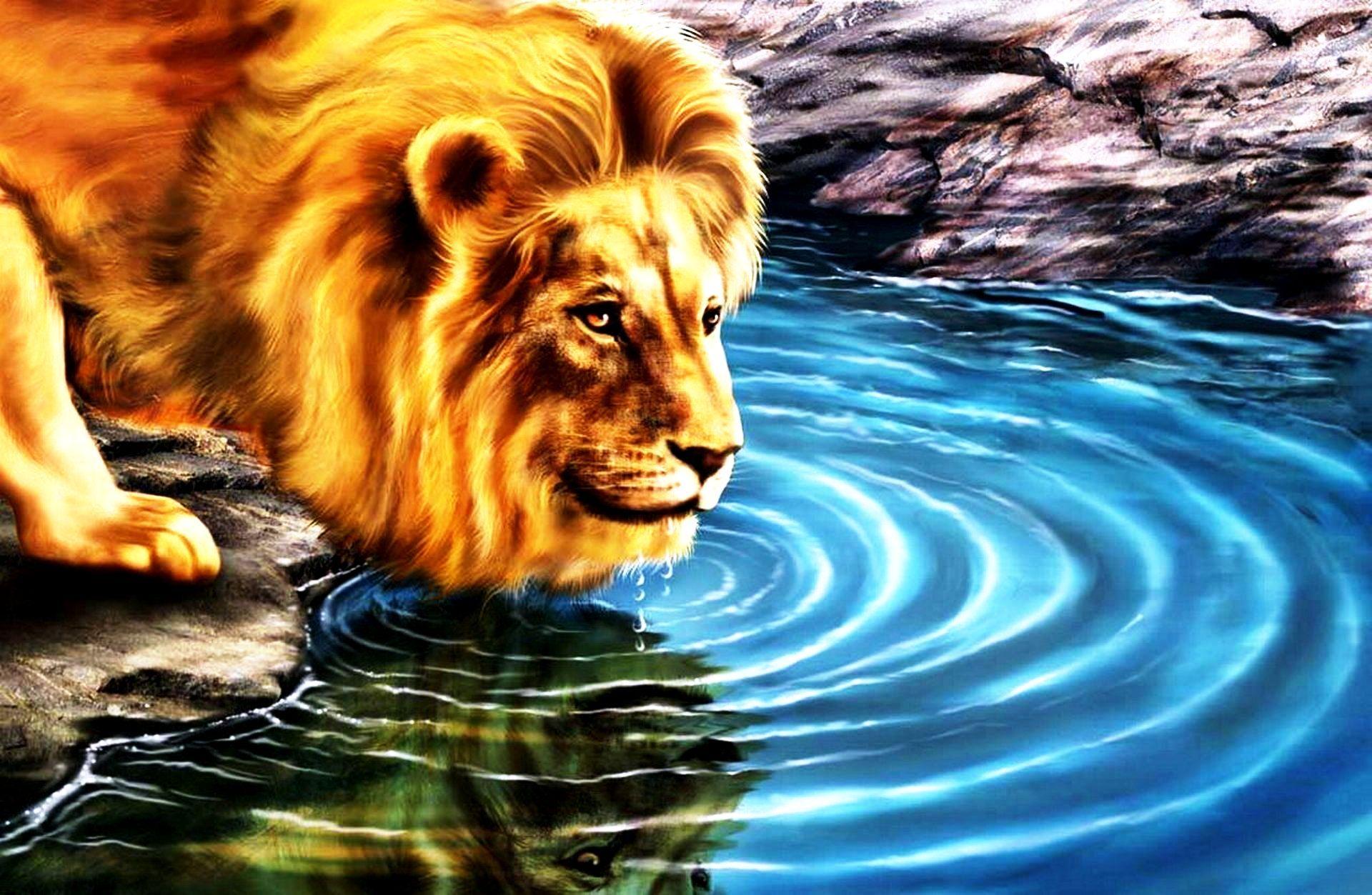 Wallpaper download lion - Undefined Free 3d Wallpaper Downloads 48 Wallpapers Adorable Wallpapers