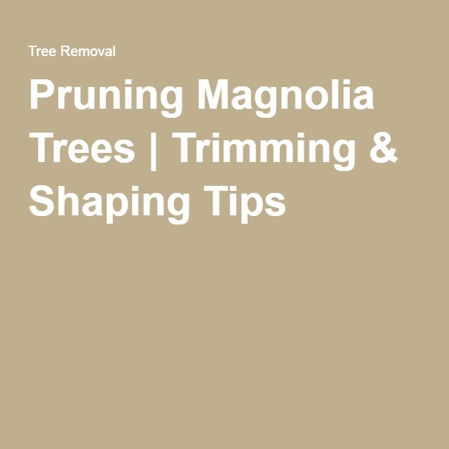 Pruning Magnolia Trees Trimming Shaping Tips Garden Plant