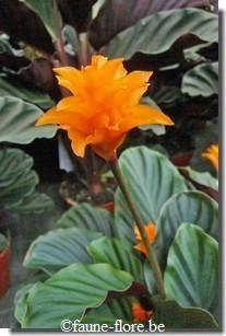 Reconnaitre Les Plantes Exotiques Fleurs Feuilles Fruits Photos Tropicale Garden Plants Plants