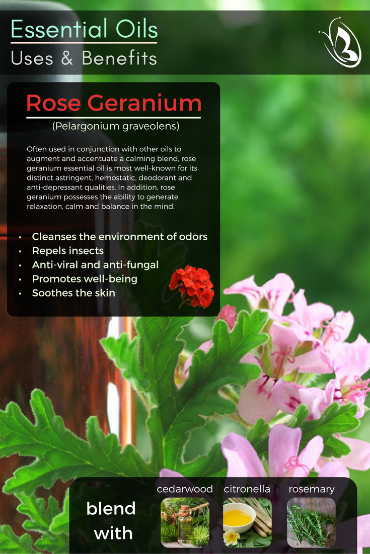 Rose Geranium Essential Oil 100 Pure Rose Geranium Essential Oil Geranium Essential Oil Essential Oil Recipes