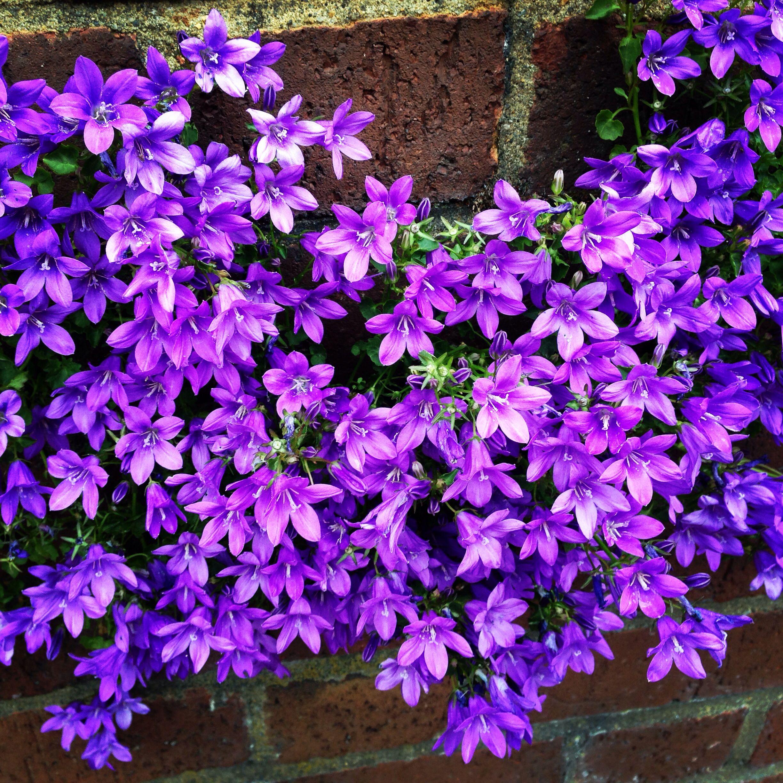 Alguém sabe que lindas florzinhas são estas?
