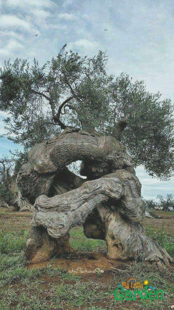 Tolle Bäume wie alt sie sind und was sie schon alles gesehen haben ist ein giga…