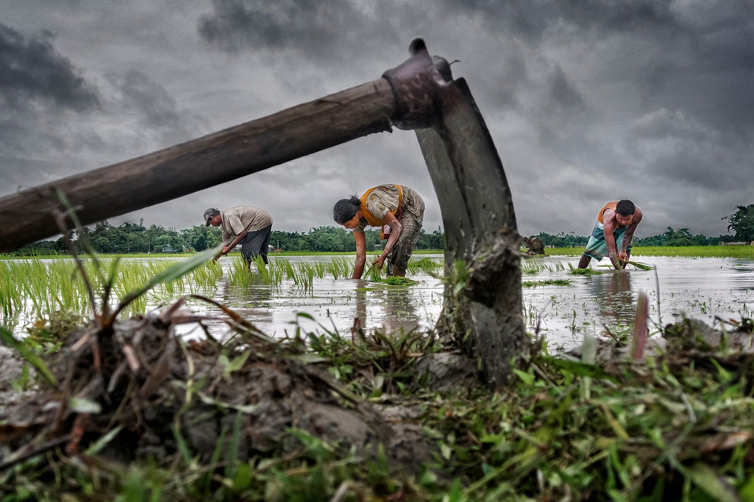 <em>Grand Prize</em>: A family farms their paddy field during monsoon season in Chilkirhaat, Cooch Behar, West Bengal, India. Rice is the staple food of the state, and paddy cultivation plays a major role. Men, women and even children take part.