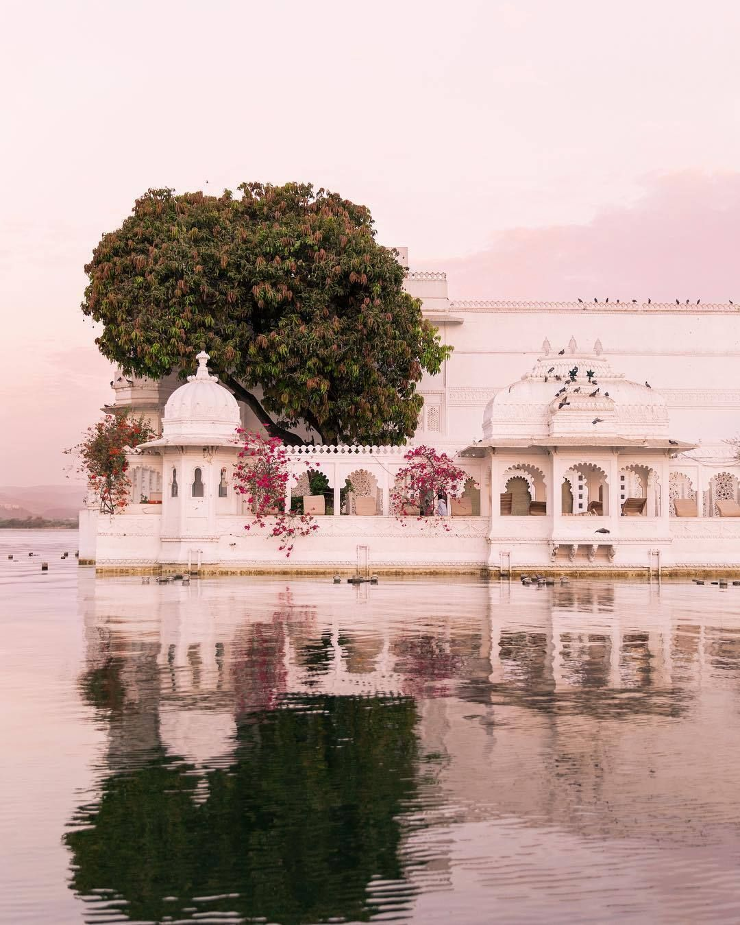 Raindrops and Roses — venusverticordias Taj Lake Palace