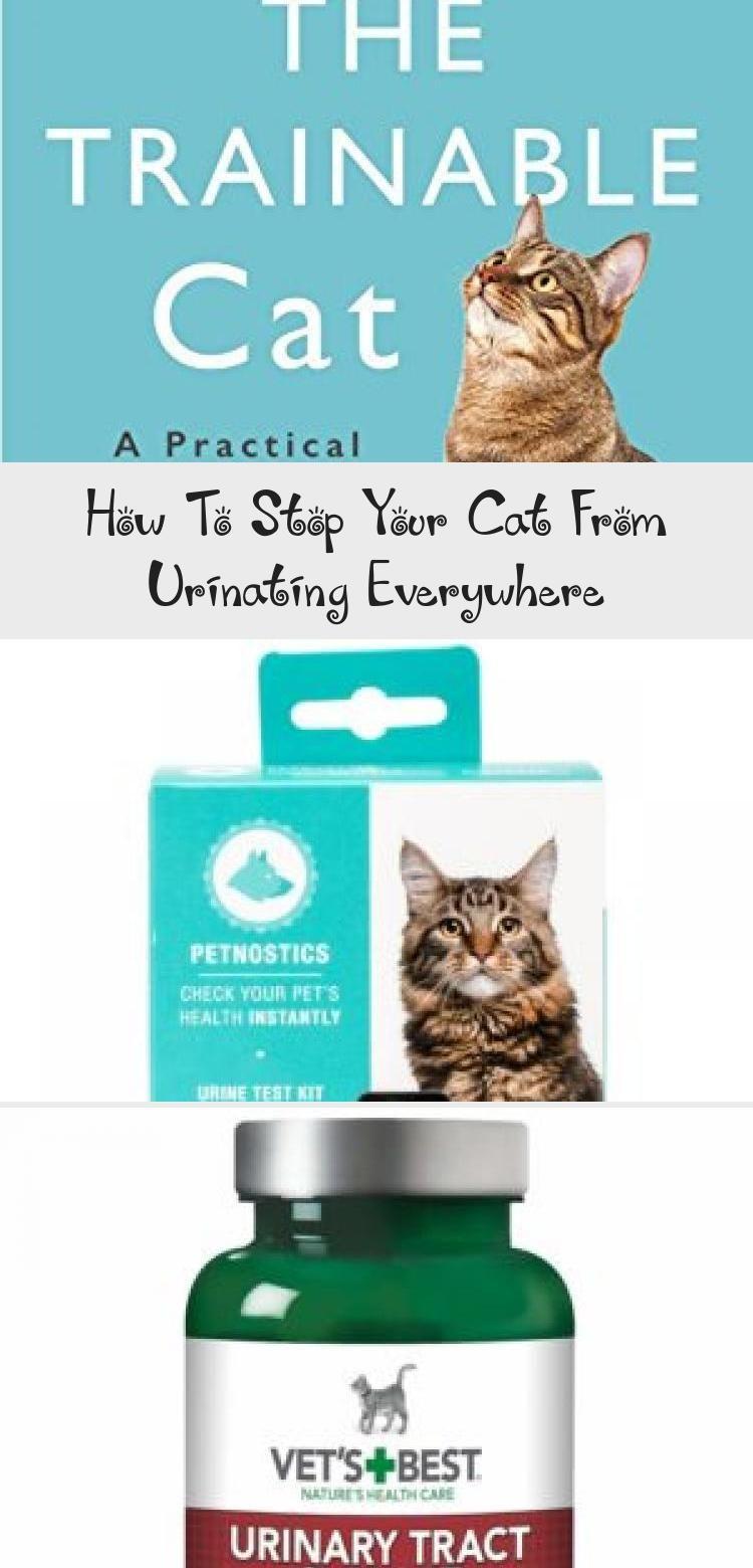My blog en blog in 2020 calming cat pet health