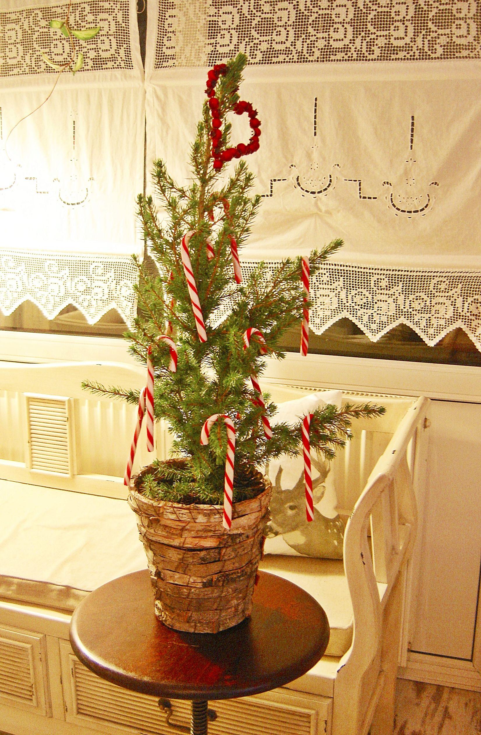 Weihnachtsbäumchen mit Zuckerstangen