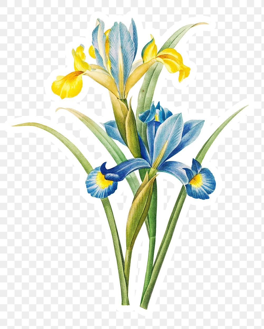 Iris Flower Sticker Overlay Design Element Free Image By Rawpixel Com Iris Flowers Watercolor Flowers Design Element