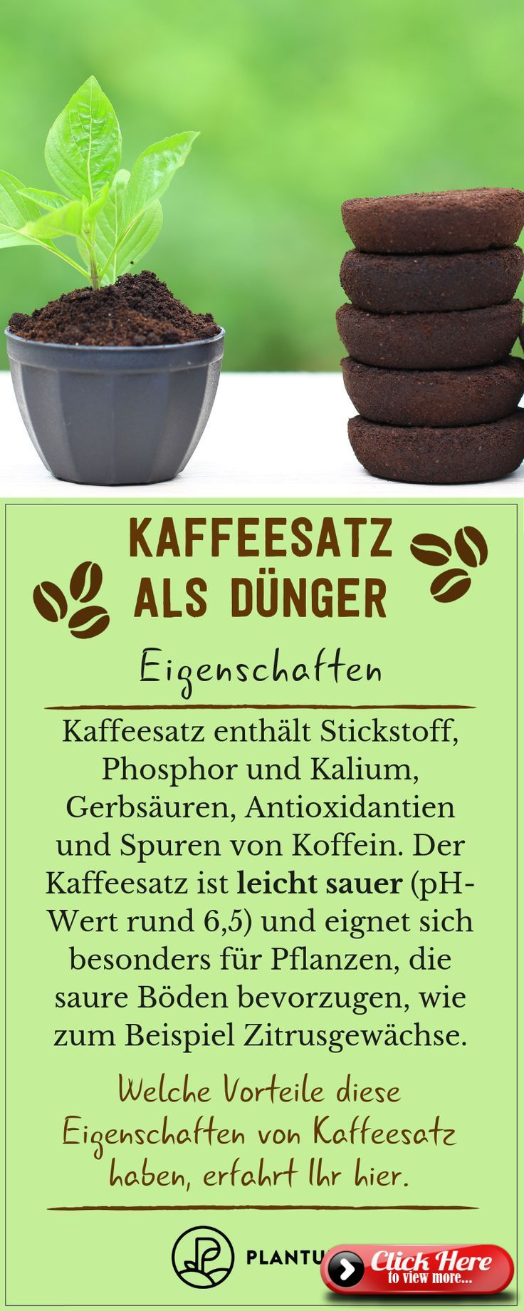 Coffee grounds as fertilizer Use & advantages of home