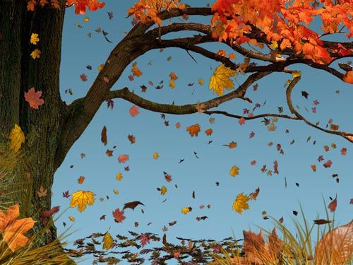 Leaf Fall Ritual