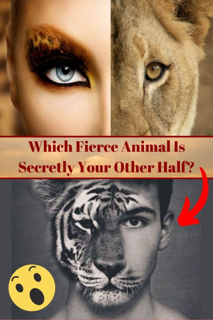 Which Fierce Animal Is Secretly Your Other Half Fierce Animals