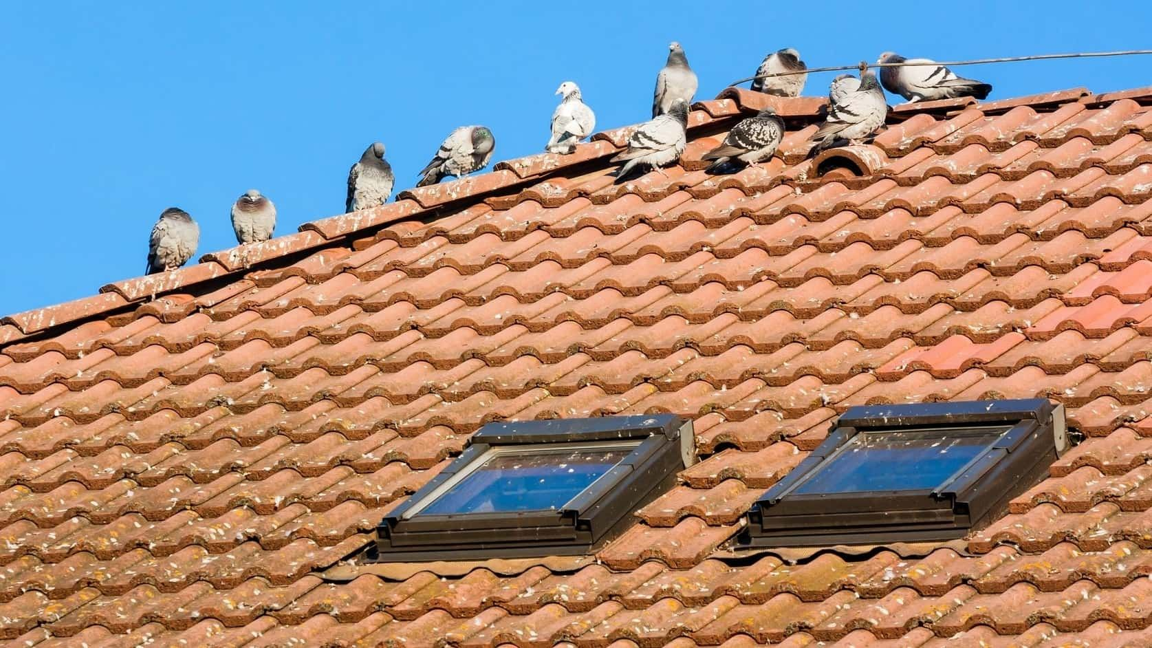 Do Birds Cause Roof Damage Bed bugs treatment, Wasp nest