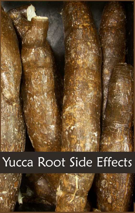 12 Yucca Root Benefits - Benefit for Hair, Side Ef