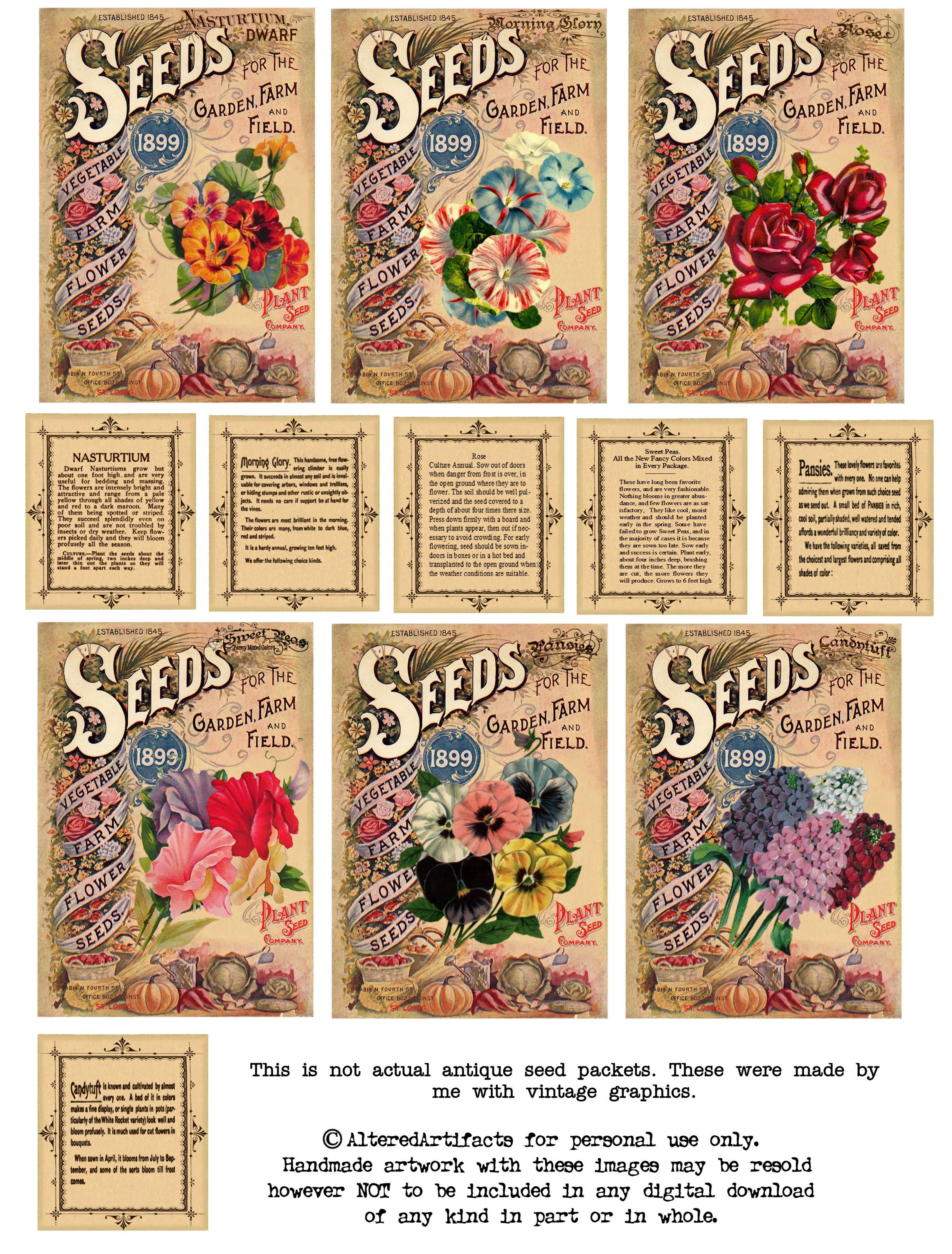 Vintage Seeds Art Free Print