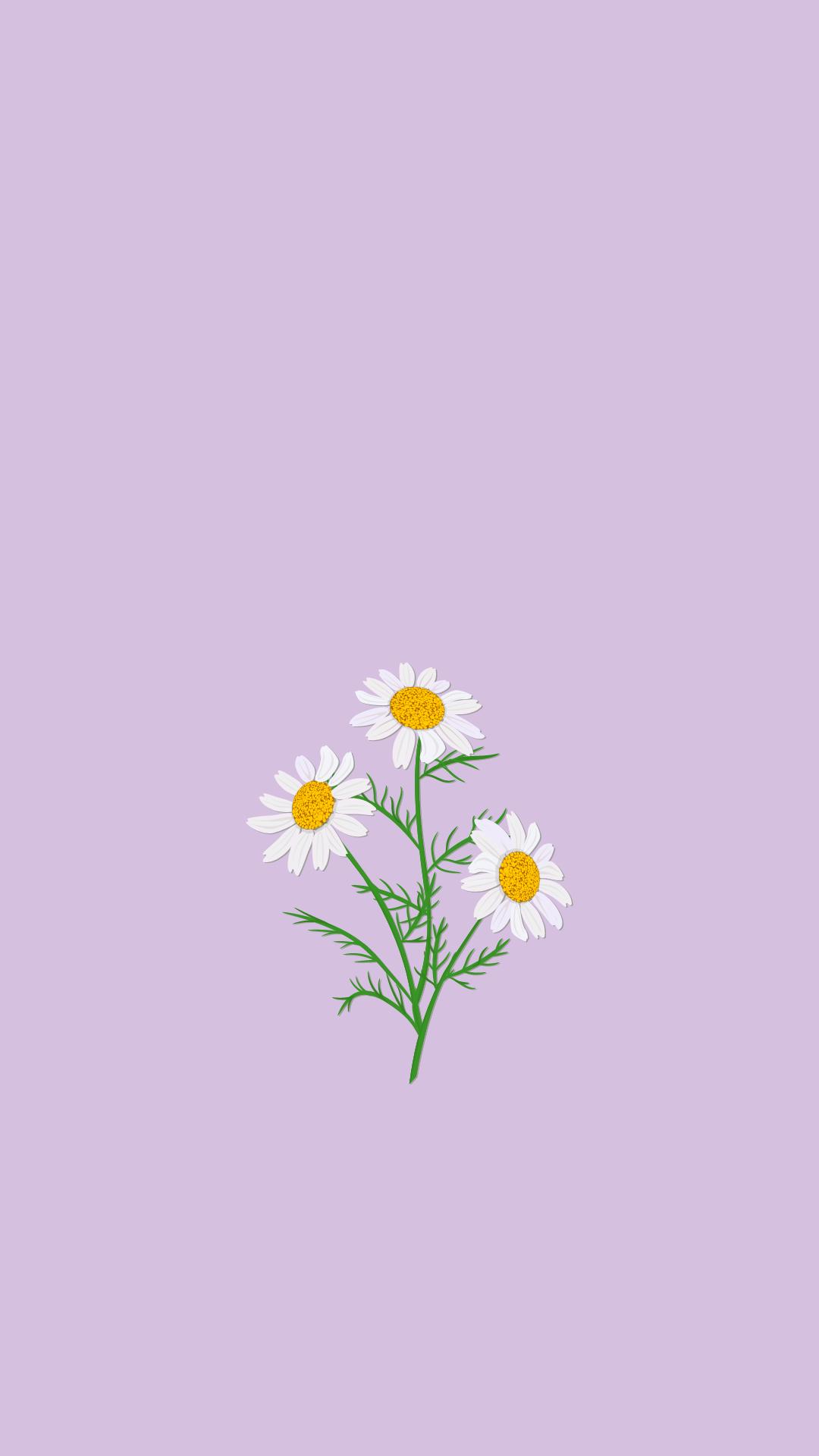 Purple Daisy iPhone Wallpaper