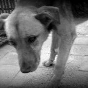 Juan, the stray dog neighbors chased away